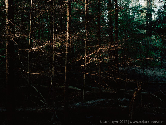 Tree Space 3, Photography by Jack Lowe