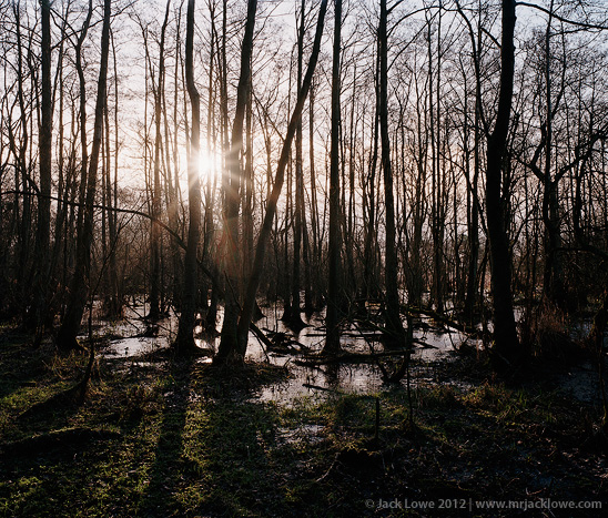Tree Space 4, Photography by Jack Lowe