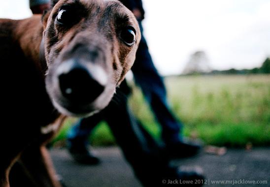 Finn, Photography by Jack Lowe