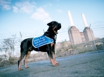 Claydon Healey Jones Mason, Battersea Dogs Home ad campaign, photography by Jack Lowe