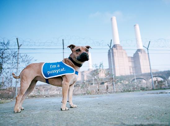 Claydon Healey Jones Mason, Battersea Dogs Home ad campaign, photography by Jack Lowe